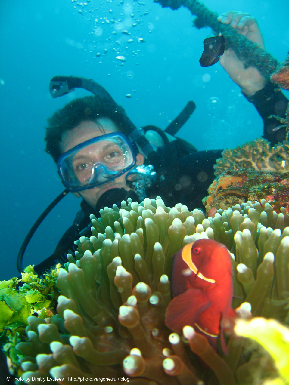 филиппины, подводное фото. на фото Дмитрий Евтифеев
