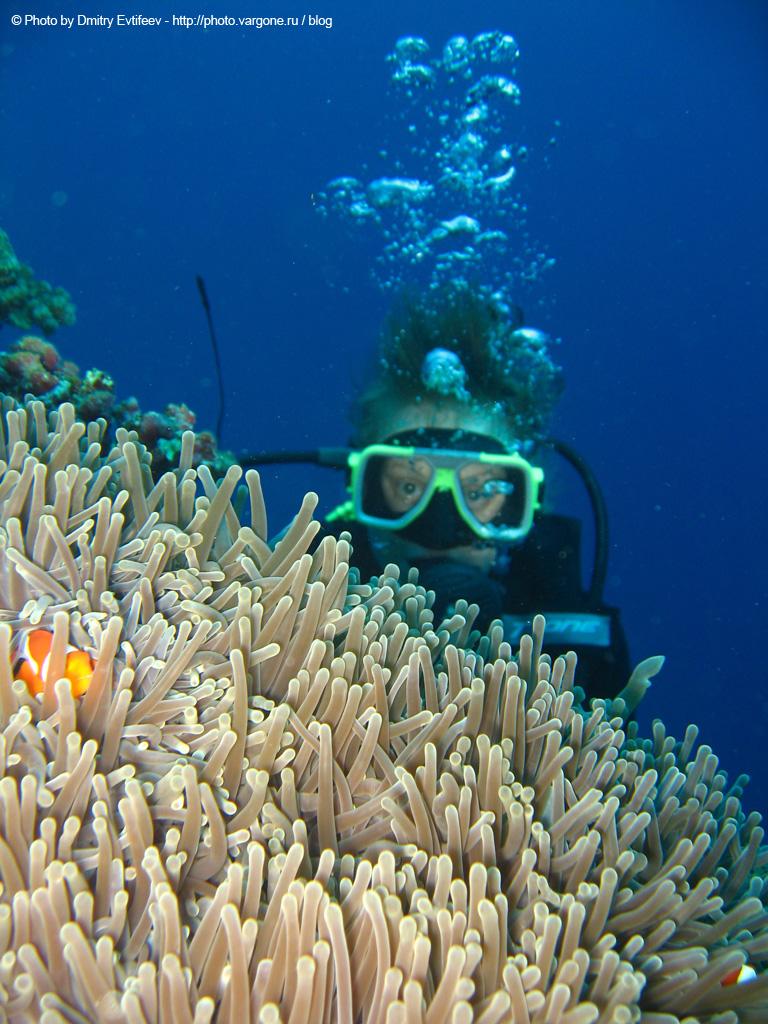 филиппины, подводное фото. на фото моя жена Аня