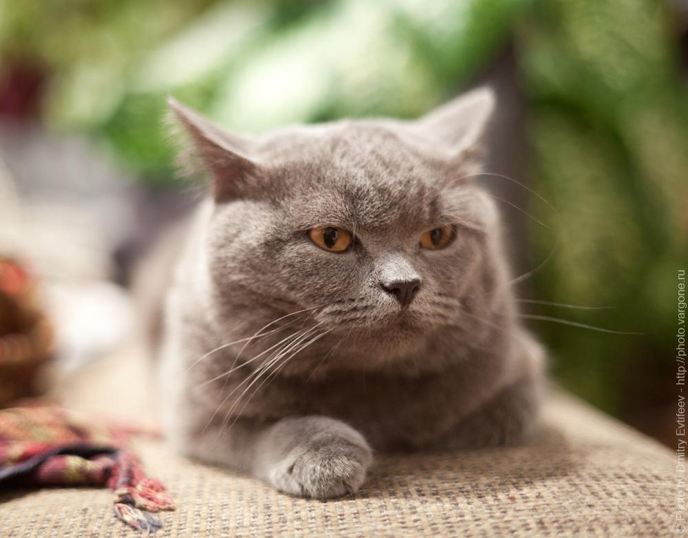 фотосъемка меха (кошек и котов) с постоянным светом