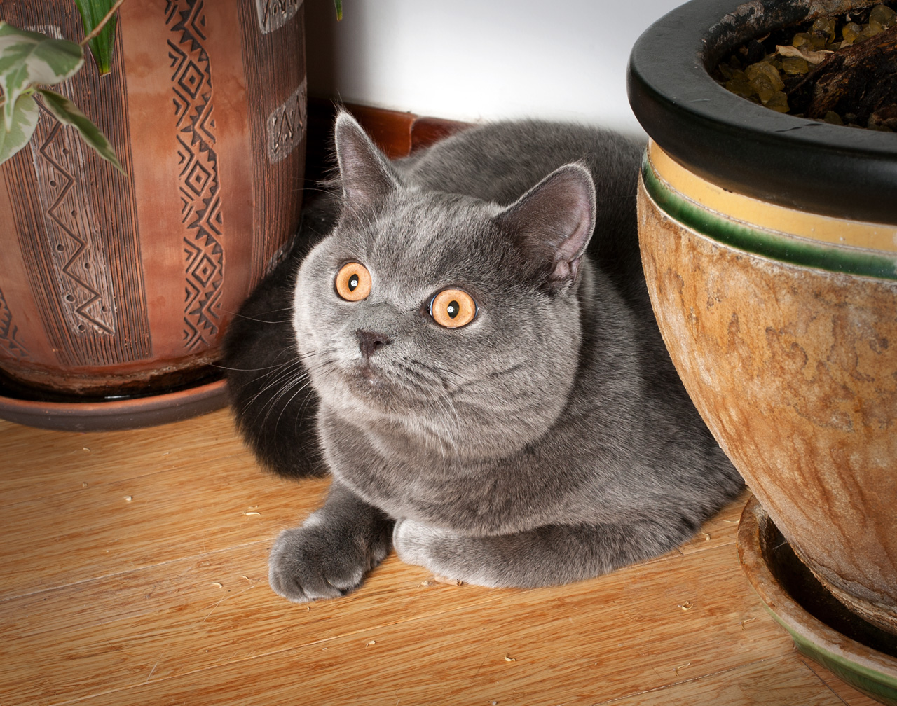 фотосъемка котов, кошек